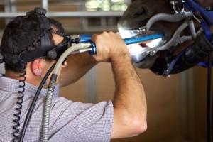 Nick Moore DVM - Equine Dentistry