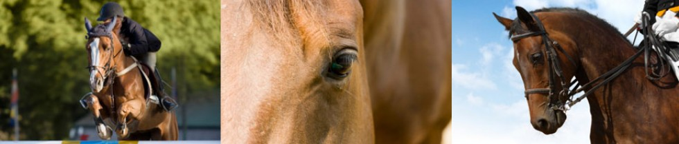 Mobile Horse Vets and equine veterinarian serving Georgetown, Austin, Hutto, Liberty Hill, Round Rock, for equine dentistry, lameness, reproduction, vaccination, coggins.