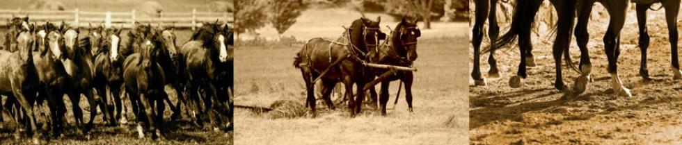 Mobile Horse Vets serving Georgetown, Austin, Hutto, Liberty Hill, Round Rock, Manor, Taylor, Plfugerville, Granger, Cedar Park, Leander, Marble Falls,